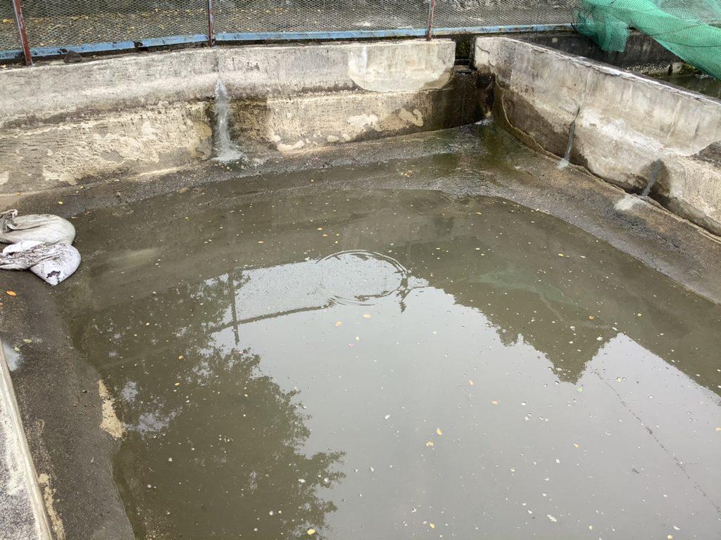 鯉池防水モルタル工事